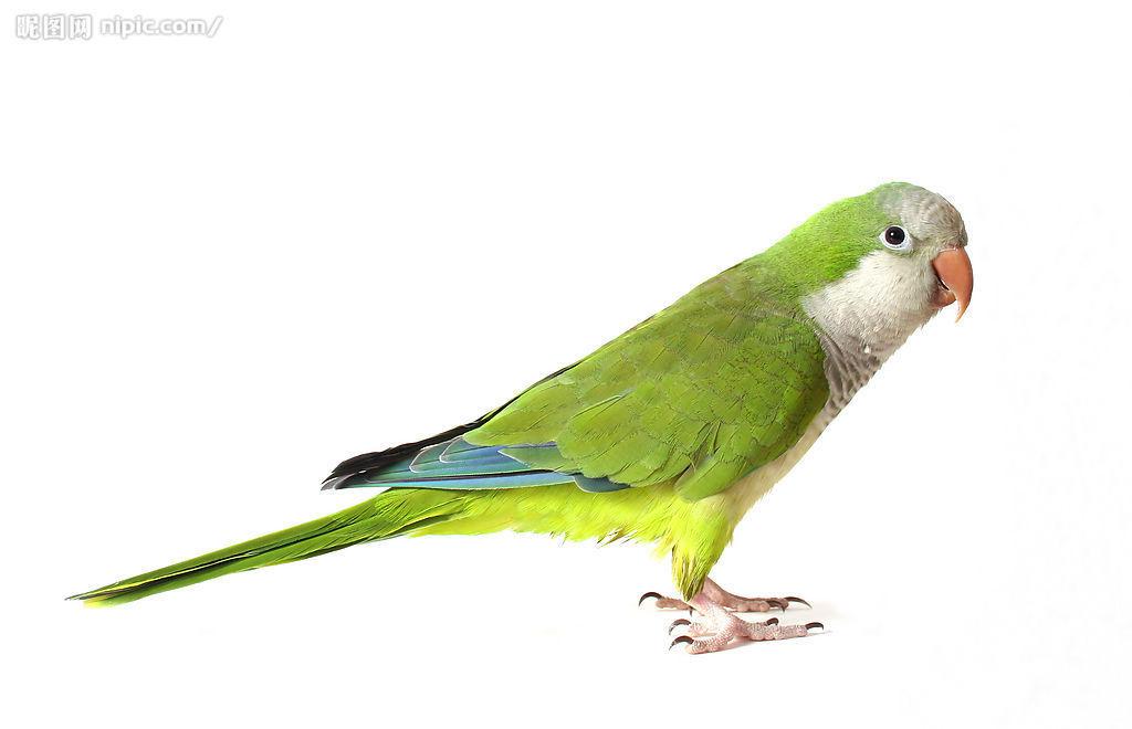 Mazuri 562A小型鹦鹉及鸟类饲料 — 维持