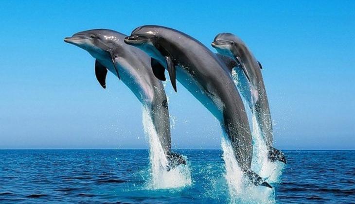 Mazuri 5M26海洋哺乳动物营养片